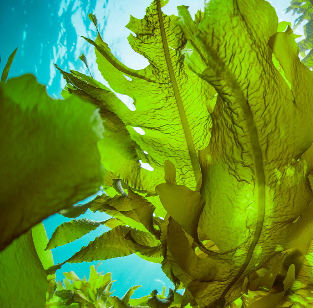 """""""With a proven technology SeaweedTech will produce & provide industries year-round with a reliable source of high-quality seaweed, thereby supporting the development of the seaweed value chain and a fundamental change towards Minimal Impact Farming."""" <br/><br/> _______"""